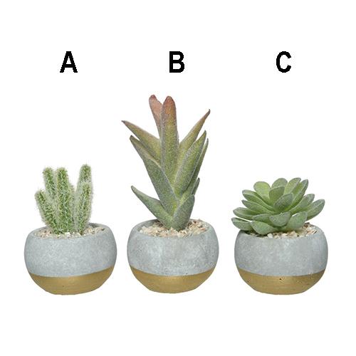 Succulent In Pot Small