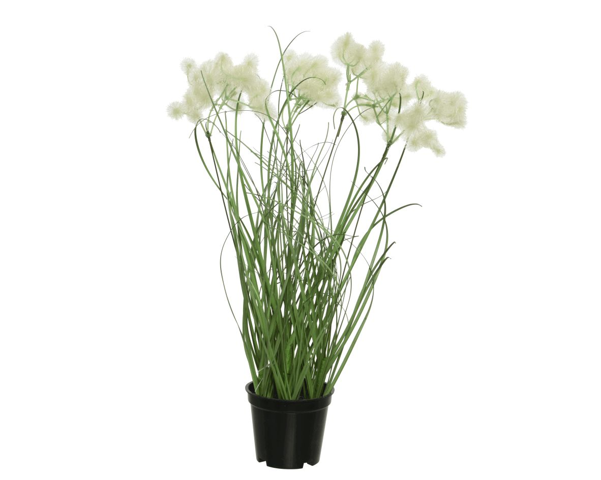 grass dandelion